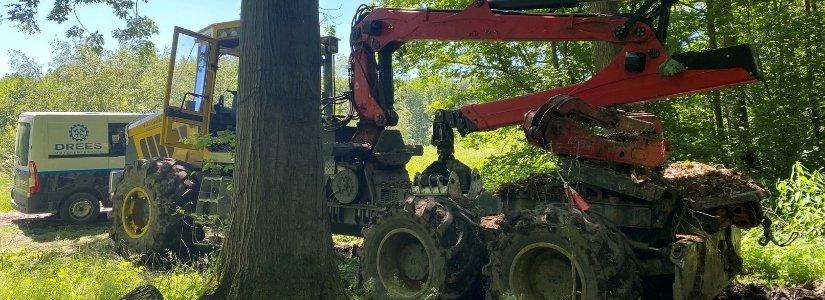 Bild Service vor Ort - Arbeiten im Wald